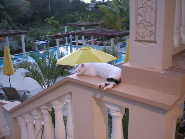 terrace-cat-and-pool