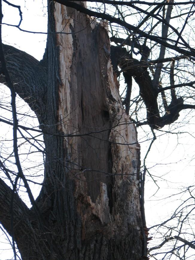 treerip