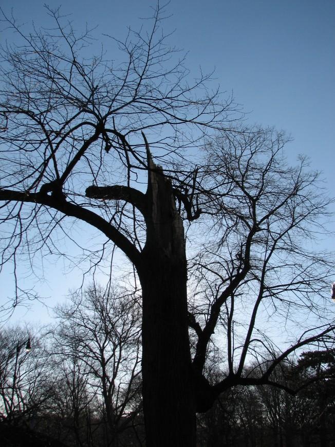 treewhole