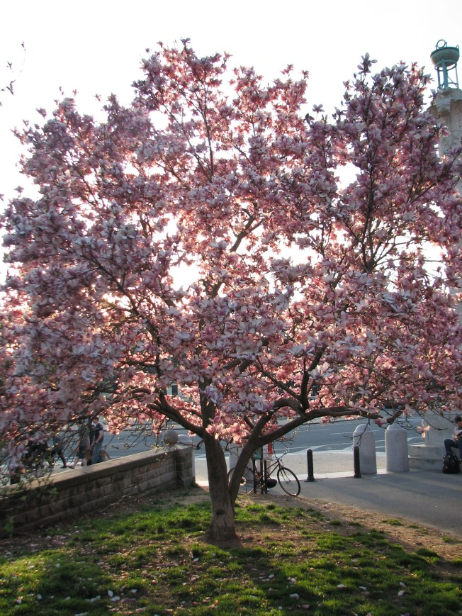pink-tree1
